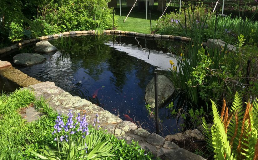 Koi Pond and Flower Beds