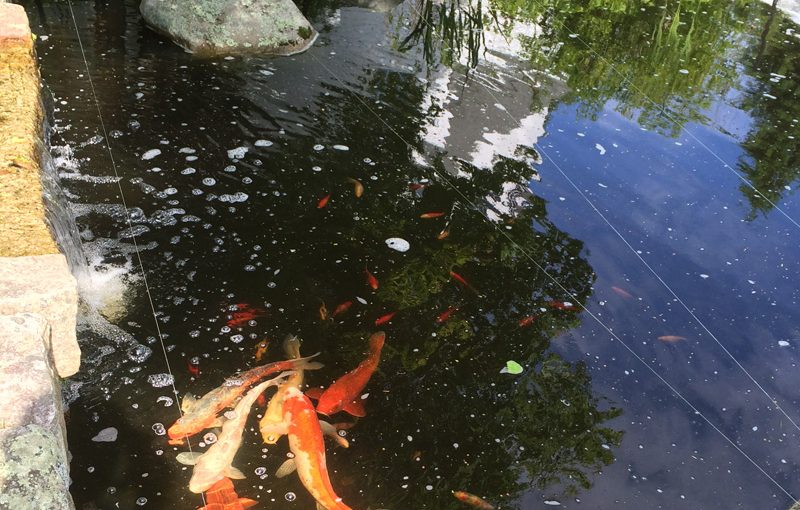 Koi Pond Water Feature