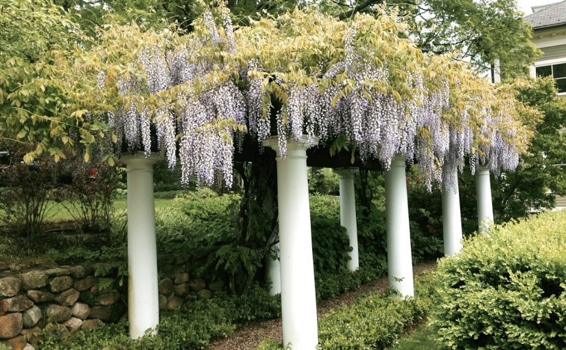 Stone Walls and Pillars with Wisteria