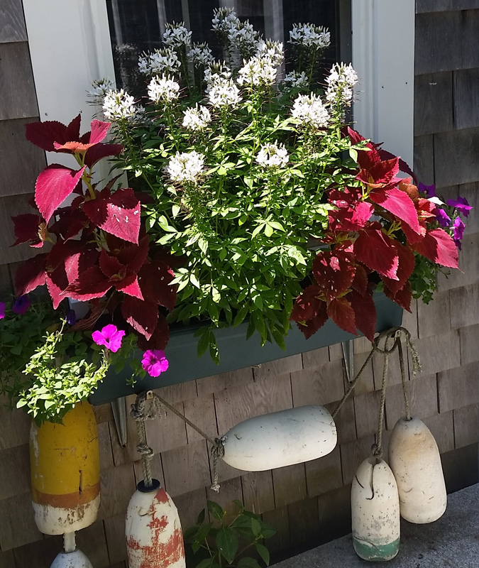 Flower Box with Nautical Decor