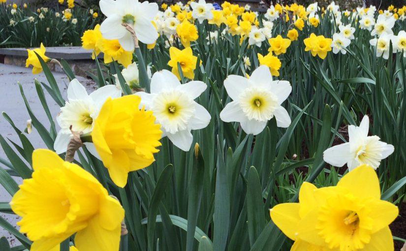 Flowers in Bloom!