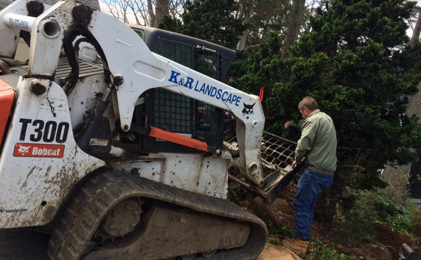 Roger helping with a tree relocation