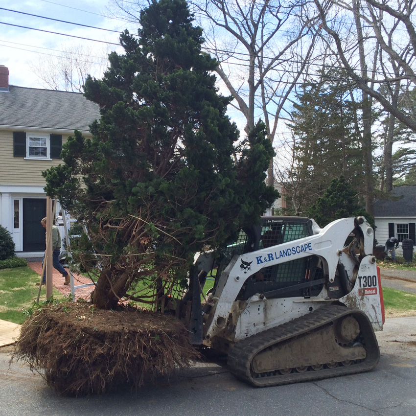 Tree Relocation